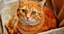Handstaubsauger für Katzenstreu
